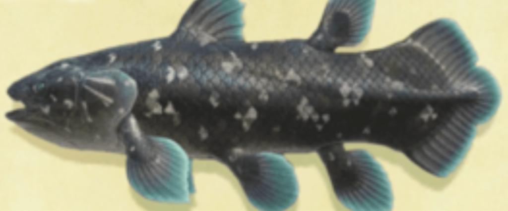 特大の魚影